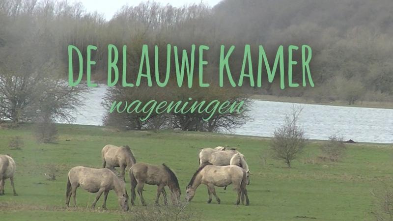 Nature in the Netherlands 'de blauwe kamer' Wageningen 'de hoge veluwe' Rheden