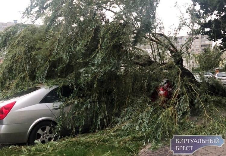 На ул. Луцкой дерево рухнуло на автомобили и лавочку у подъезда