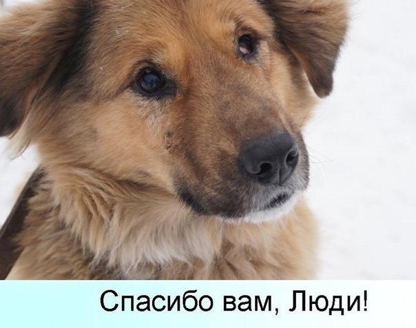 Картинка спасибо с собакой и кошкой