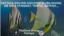 Pattaya koh rin discover scuba diving we see a stingray tortle batfish with Thailand Diving Scuba