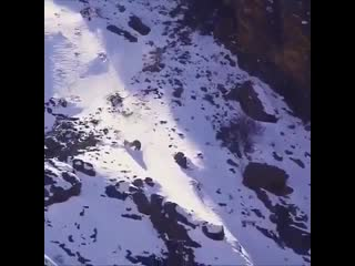 Imagine being so hungry you are jumping off cliffs to catch your food. 🐆 😧 watch till the end !👍 ⁣ imagine being so hungry you