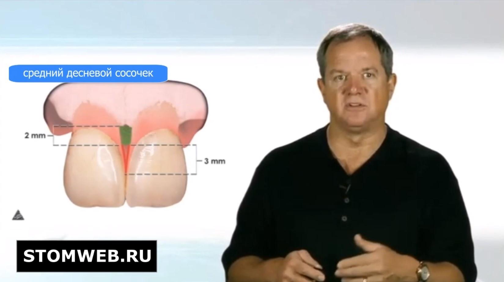 Биологическая ширина. Строение и анатомия.