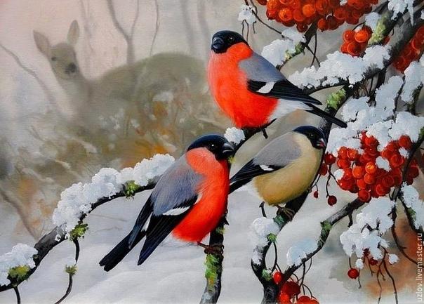 Обои На Рабочий Стол Зима Снегири