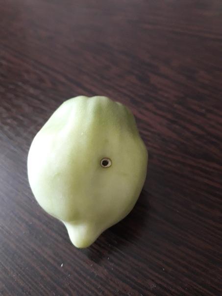 Подскажите пожалуйста что  с помидорам и как...