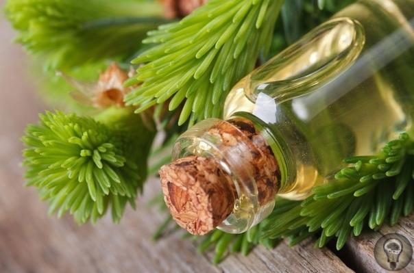 Лечим болезни пихтовым маслом