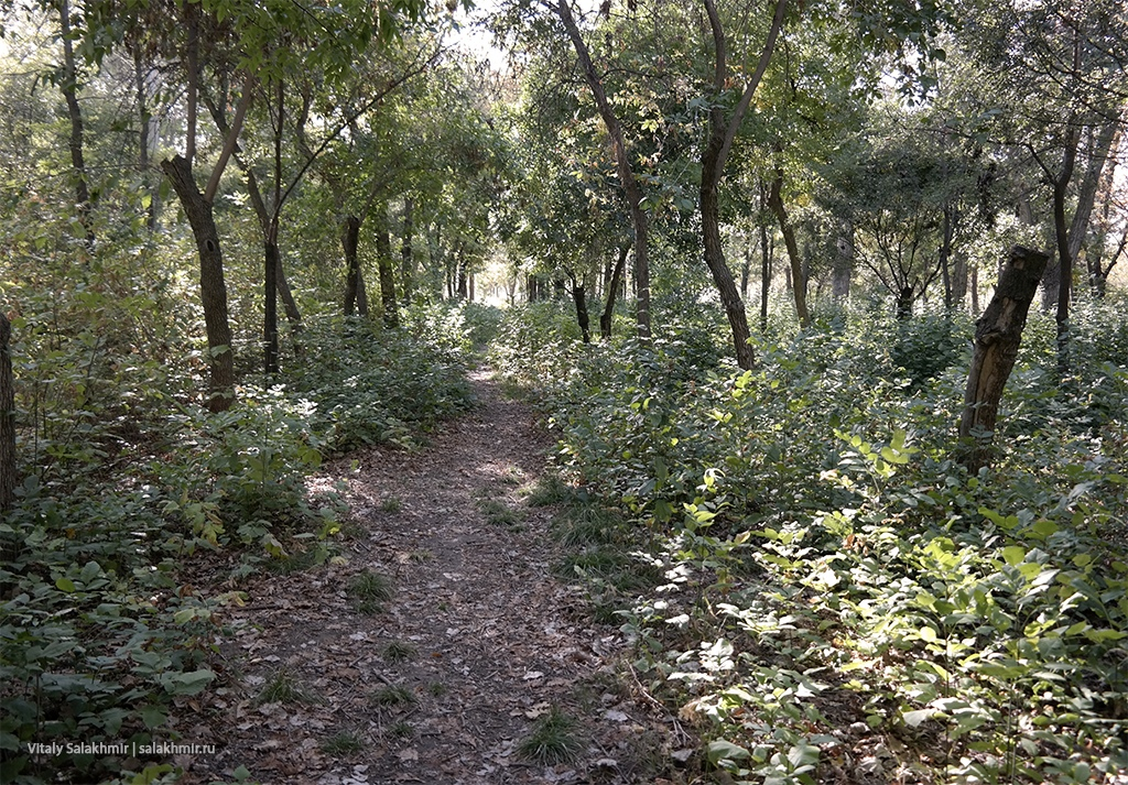 Прогулки по лесу, Южный парк, Бишкек 2019