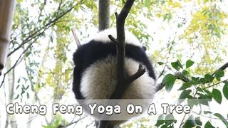 Super Model Cheng Feng Doing Yoga On A Tree | iPanda