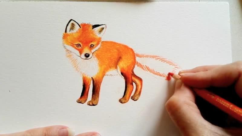 🦊 Wie zeichnet man einen Fuchs in Farbe und Echtzeit 🦊 How To Draw A Fox 🦊 как се рисува лисица