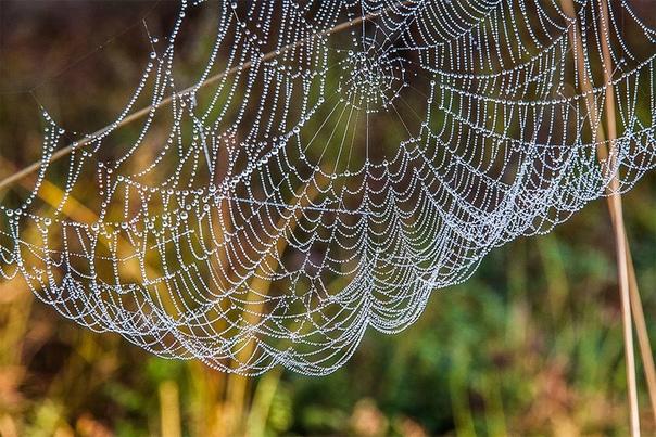 Читаем. Злыгостев А.С. Осенняя паутинаВ теплые солнечные дни сентября много интересного можно увидеть в лесу и в поле. И первое, что попадается на глаза в эти дни, - паутина.Паутина везде: на