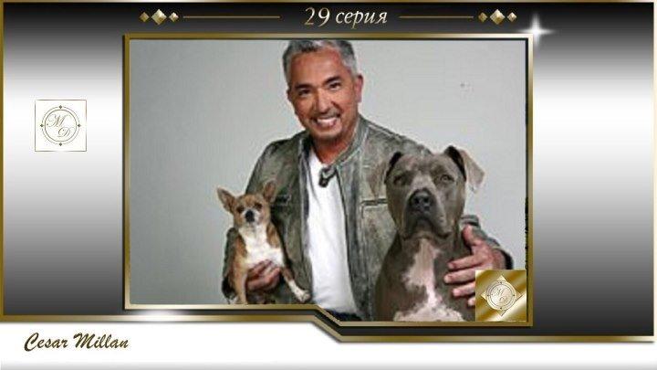 29 серия Сезар Миллан Переводчик с собачьего Boomer Josh 2004 04