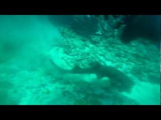Deep water encounter #Bivalium Mx sr Archive