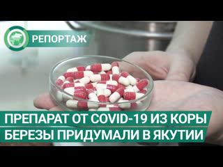 Испытания препарата от COVID-19 из ягеля и коры березы идут в Якутии. ФАН-ТВ