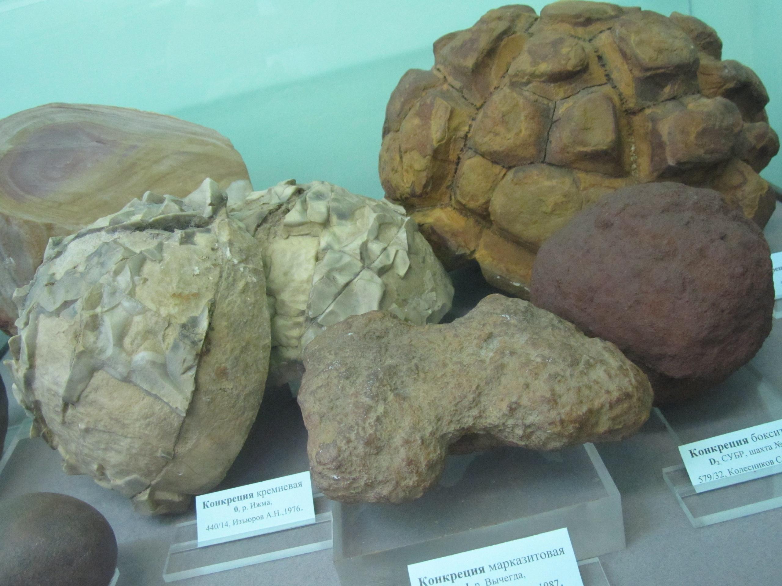 конкреции в виде черепах в геологическом музее в Сыктывкаре