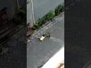 En Indonésie, un singe à moto tente de kidnapper une enfant en pleine rue