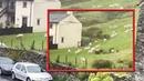 Стадо овец неподвижно стояло несколько часов, чем очень напугало мужчину!