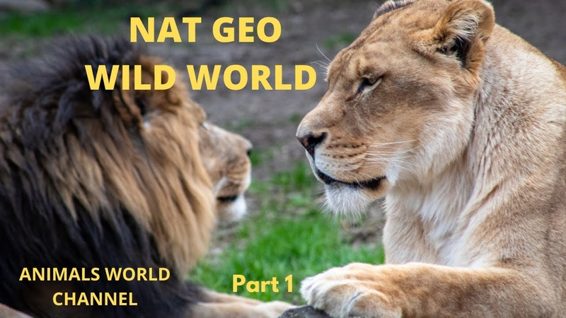 National Geographic Documentary HD 2020 World's Deadliest Wild Lions and Dogs NatGeo Wildlife Part 1 YouTube