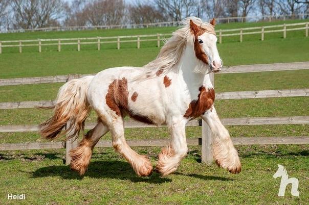 Волонтёры спасли лошадь, которую уже посчитали погибшей Но она выжила и показала, какой красавицей может быть!Бедолагу нашли на одной из строительных площадок в Британии и передали волонтёрам из