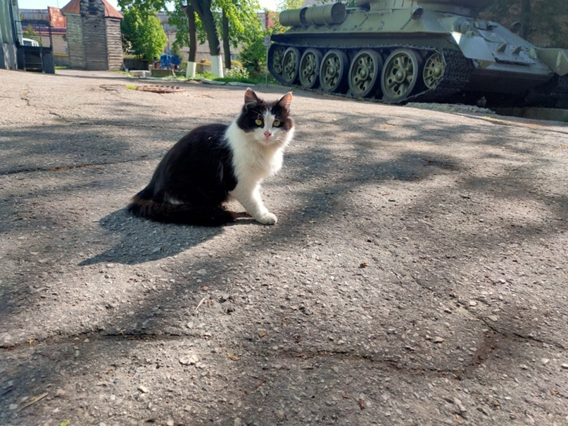 Охранник краеведческого музея 😼
