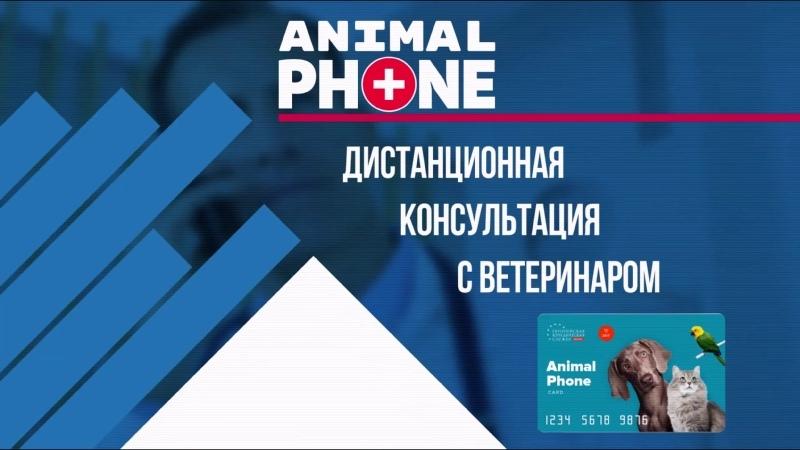 Аnimal PHONE