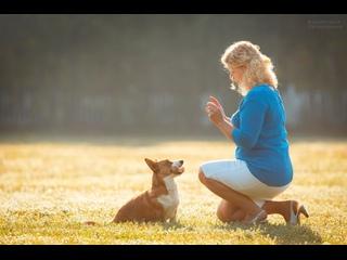 Мифы о домашних животных. Собаки. начало