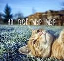 Фотоальбом Андрея Рыжова