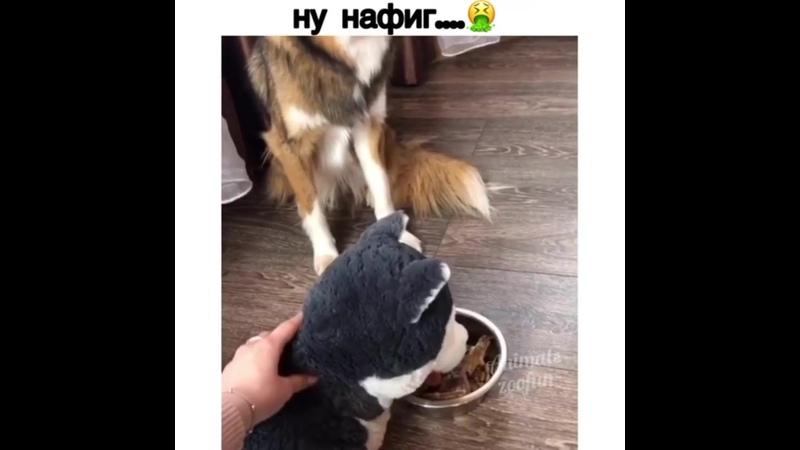 Собака понимака