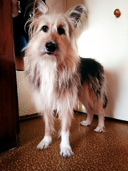 ❗Здравствуйте,про шу выложить Давно потерялась собака 2 марта