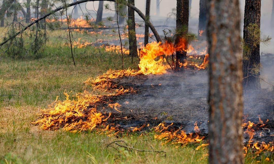 В Саратовской области вводится особый противопожарный режим