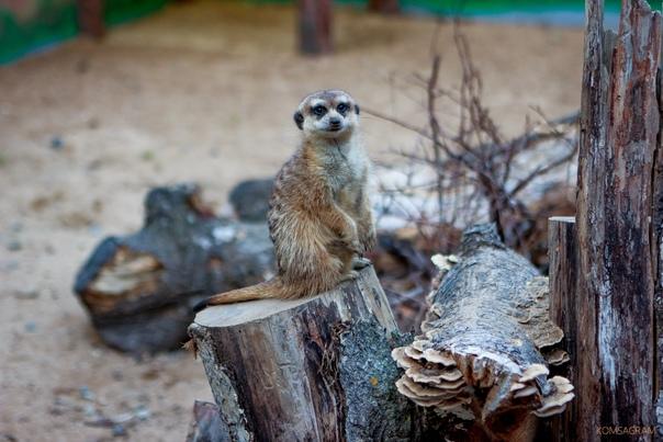 В выходные зооцентр «Питон» приглашает на показате...