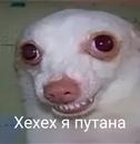 Персональный фотоальбом Амины Ганеевой