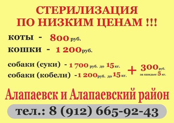 СТЕРИЛИЗАЦИЯ/КАСТРАЦИЯ по доступным ценам (кошки, ...