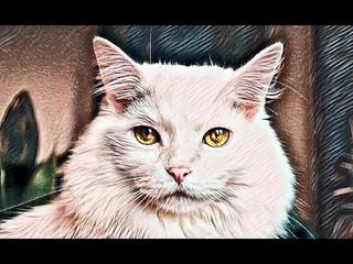 Кот трижды спас мою жизнь. Реальная история
