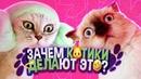 КОШКИ 2021 Смешные коты приколы с котами – Смешные кошки и приколы 2021