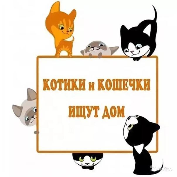 Ищем дом картинки котята