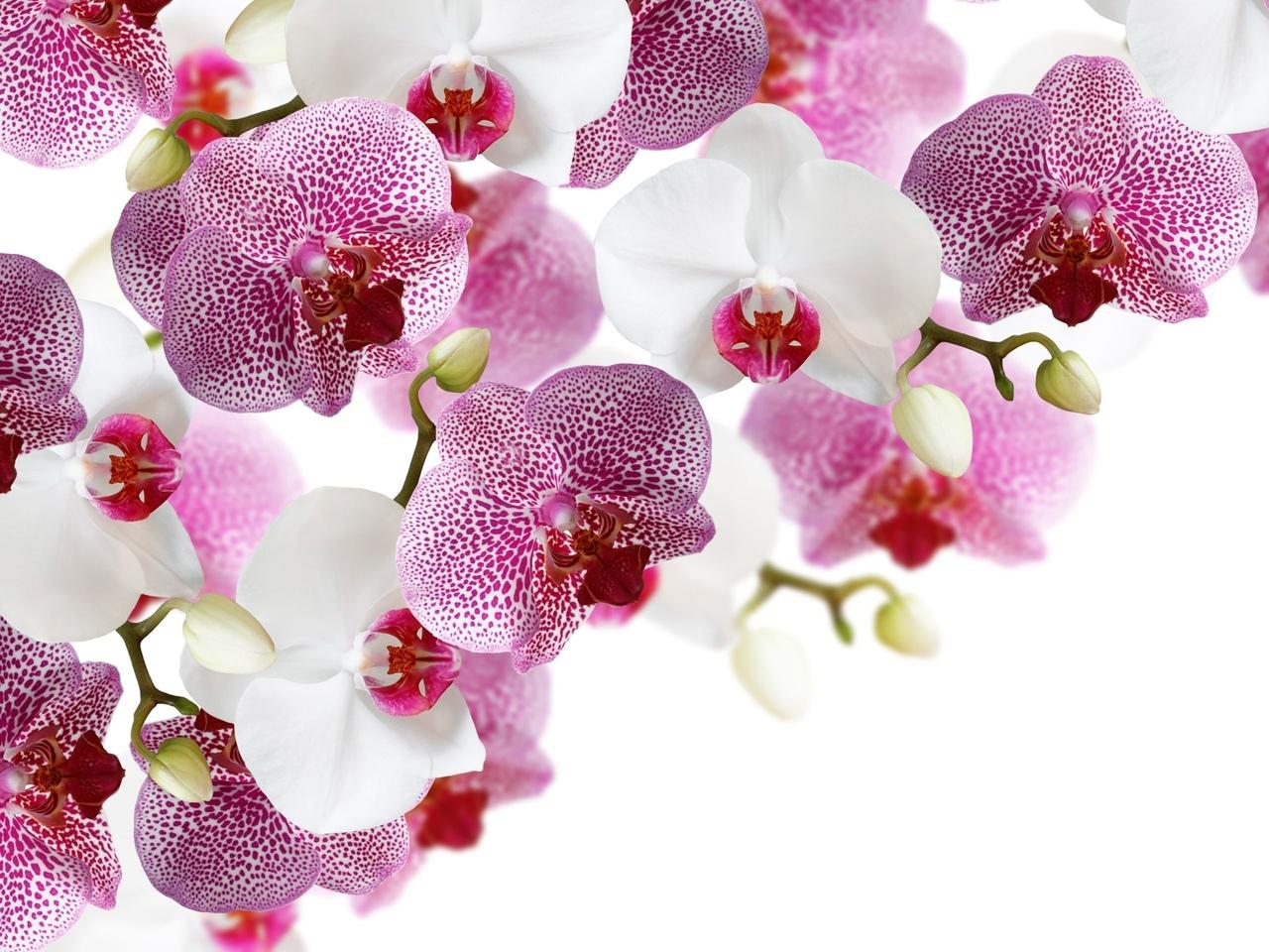 Уход за орхидеями. Советы опытных.