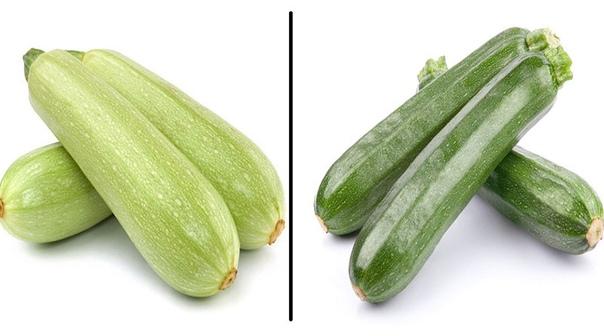 В чем разница между кабачком и цукини