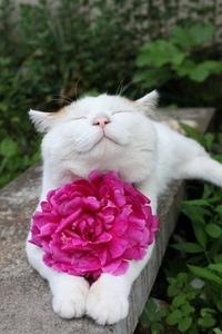 Счастливые котэ)