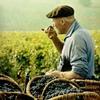 вино и музыка: Wine Guide - vin & vinyl