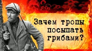 В чем была смекалка партизан в годы Великой Отечественной войны? Для чего тропы посыпали грибами?