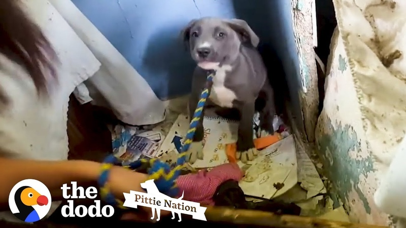This Dog Is So Nervous Because She Is Protecting Something So Special The Dodo Pittie Nation