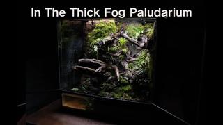 '짙은 안개 속' 팔루다리움 | 'In The Thick Fog' Paludarium | Making A Paludaium 600*450*600 | Making A Jungle
