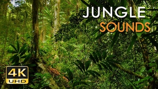 4K Jungle Sounds - Exotic Birds Singing - Tropical Forest - Relaxing Nature Video - Ultra HD - 2160p